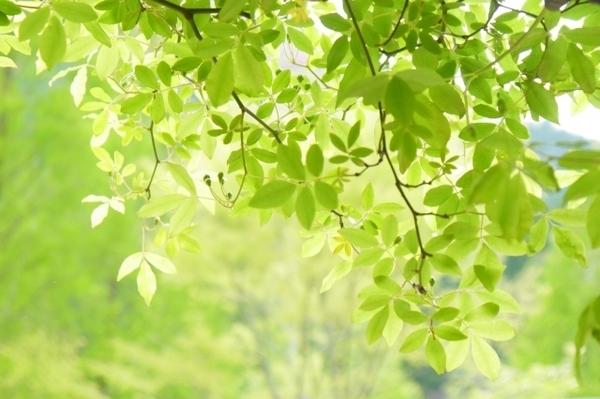 4月の緑.jpg